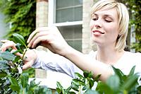 Woman trimming plant with garden scissors