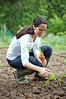 Woman picking carrots in garden