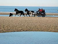 Belgium,sea,coast,