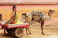 woman on camel cart, wearing sari