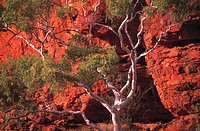 Kings Canyon, Northern Territory, Australia,