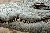 Gran Canaria, Crocodile Park, Villa de Aguimes