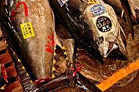 Tsukiji morning wholesale fish market. Tokyo, Japan