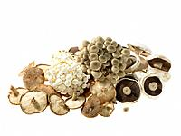 Pile of various Mushrooms