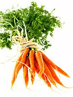 Bunch of Carrots tied with twine