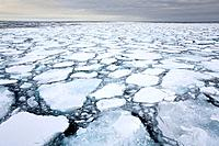 Sea Ice, Greenland Sea, High Arctic