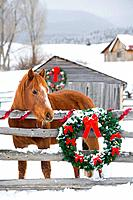 Horse on Soward Ranch decorated for the holidays Antelope Valley Creede Colorado