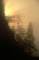 Sunlight & fog in trees New Eddystone Rock Southeast AK summer scenic
