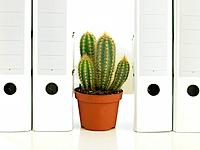 Cactus plant between folders
