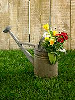 Flowers in a watering can in a lawn