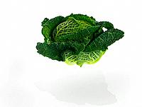 Close_up of a cabbage