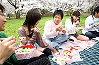 Young people enjoying lunch surrounded with cherry blossoms, side view, Japan