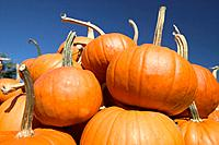 A Towering Pile Of Pumpkins