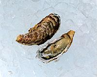 Oysters, high angle view