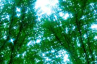 Trees in Sunshine, Low Angle View, Lens Flare, Blurred Image