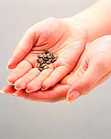 Grains in woman´s hand