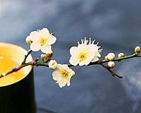Plum blossoms and bamboo cylinder