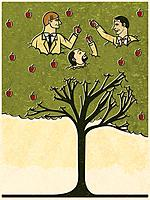 Three men picking apples from a tree