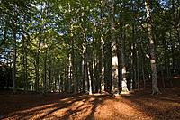 Tuscany, Italy, Forest near Mount Amiata