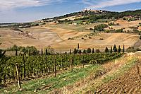 Italy, Tuscany, Vineyard near Pienza