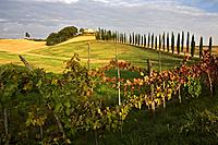Italy, Tuscany, Wine estate