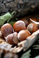 Hazelnuts on country setting