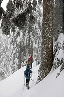 People snowshoeing in fog covered mountain at mount seymour provincial park in north vancouver british columbia canada