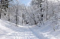 Beautiful winter nature Road through a park covered with snow High Park Toronto Ontario Canada