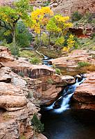 Autumn cottonwoods display brilliant foliage above a waterfall on Mill Creek in Moab, Utah, USA