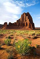 Mules ear wildflowers bloom in the desert below the 400' monolith known as Temple of the Sun in the Cathedral Valley, Capitol Reef National Park, Utah...