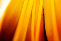 Abstract of Day Lily Hermerocallis.