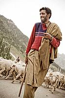 sheep herder walking down the road with his flock in Kashmir India.