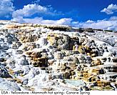 USA _ Yellowstone _ Mammoth hot spring _ Canary Spring