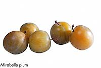 Mirabelle plum
