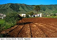 Spain _ Canary Islands _ Tenerife _ Tegueste Spain