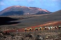 Spain _ Canary Islands _ Lanzarote _ Timanfaya