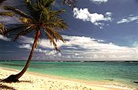 French Caribbean _ Caribbean Islands _ Marie Galante _ Capesterre _ Beach of the Feuillere