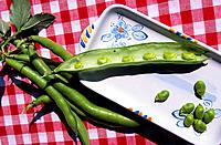 Italy _ Sicily _ Broad Bean