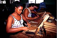 Cuba - The Havana - Cigar Making (thumbnail)