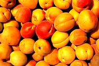 Turkey - Istanbul - Apricot (thumbnail)