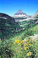 USA _ National Park _ Glacier _ Hidden Lake _ Logan Pass