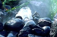 Spa _ Termal _ water source