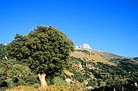 Greece _ Crete _ Surroundings of Lassithi Plateau _ Seli Ambelou Mountain pass