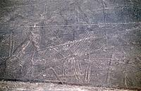 Peru _ Lines of Nasca _ Albatross