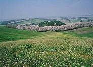 Farmland,Seosan,Chungnam,Korea
