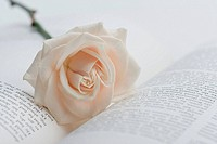 Rose on book, close_up