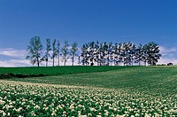 Hokkaido,Japan
