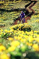 A man mountain biking in flowers in spring in Parkdale Oregon