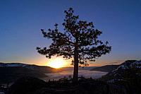 A silhouette of a tree at sunrise at Donner Lake in California