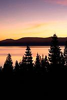 Silhouetted trees at sunrise above Lake Tahoe California